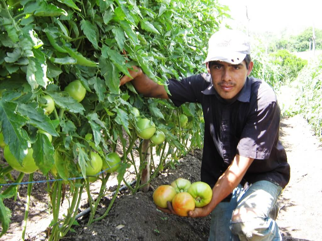 Créditos a la producción agropecuaria en Nicaragua