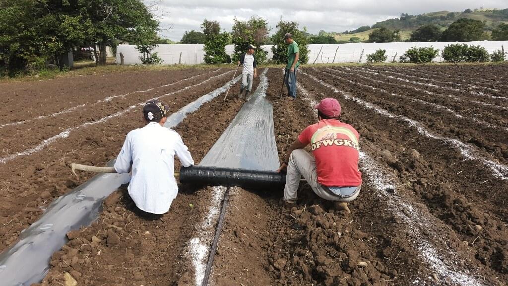 Desarrollo agrícola en Nicaragua